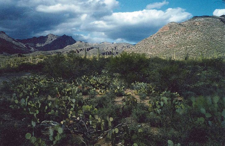 A nice view of an Arizona desert.