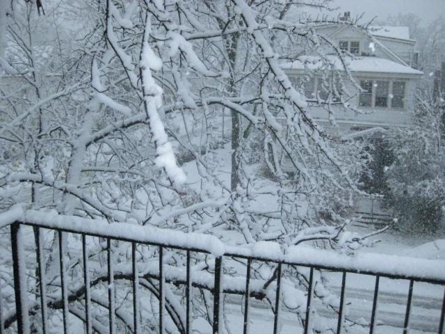 Winter Wonderland, Minneapolis