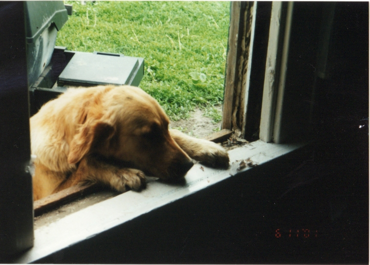 A family pup, possibly Brandy, peeks through a window.