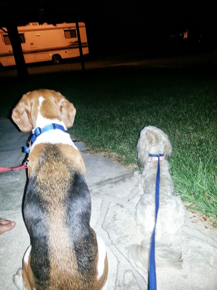 Baxter and Louie waiting for Louie's dogsitter to come rescue him.