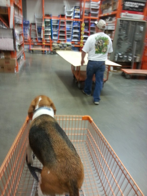 Even Baxter got to have some fun, riding along to Home Depot to buy some wasp spray, tire filler, plywood, and a ladder.