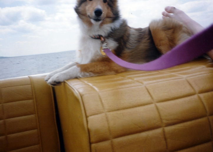 The bottom part of family pooch Cooper (?) on a boat at the lake.